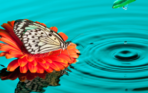 Butterfly Drops Wallpaper