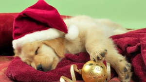 Christmas Dog Wallpaper