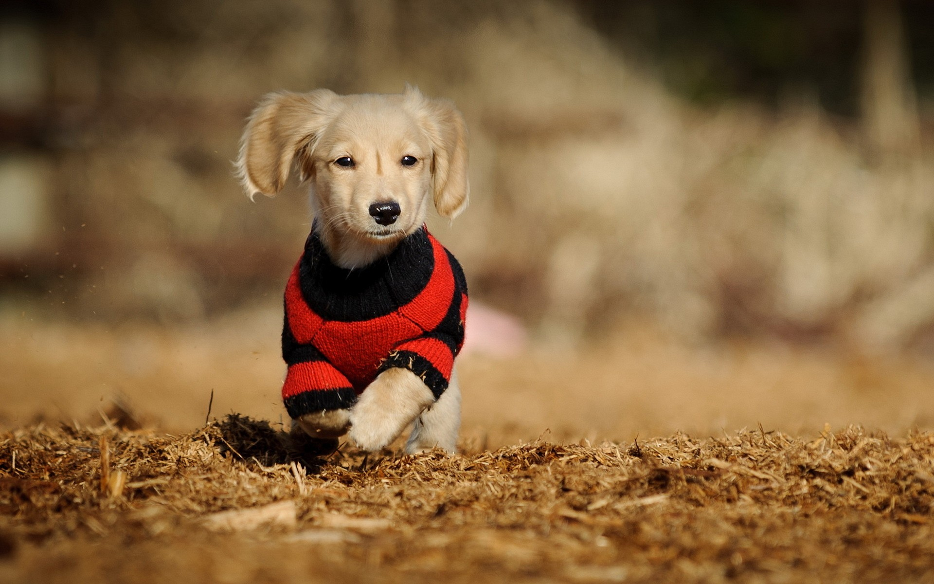 cute dogs pictures wallpapers - wallpaper hd