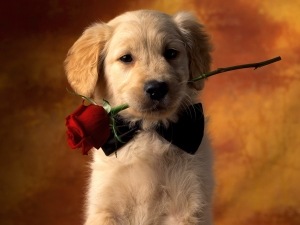 Cute Puppy Love Wallpaper