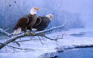 Eagles on Winter Wallpaper